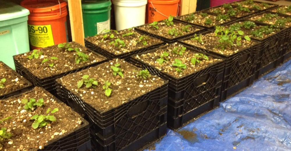 No Experience Needed: 5 Essentials For Starting An Urban Garden. Jessie  Kiddie Pool