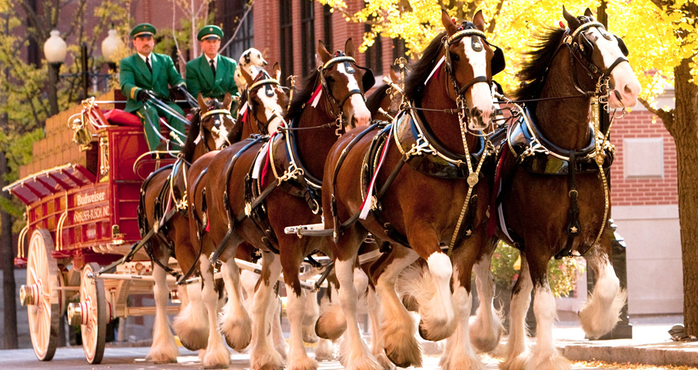 clydesdales1